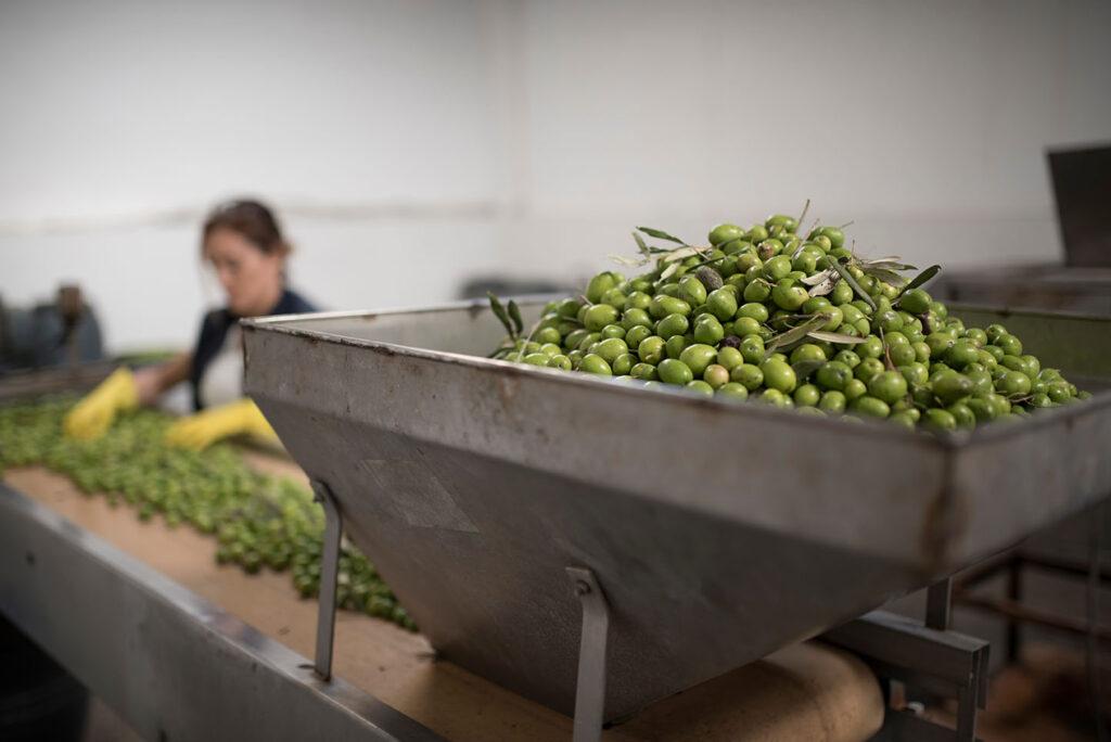 tolva-produccion-aceite-oliva