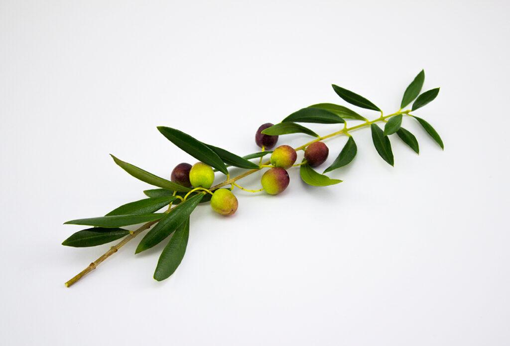 tipos-de-aceite-segun-oliva